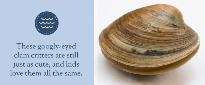 Googly-eyed clams are cute and fun and sure to be loved by your kids.