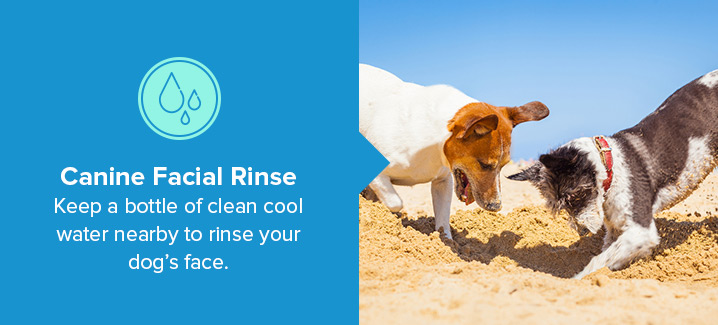 Canine Facial Rinse