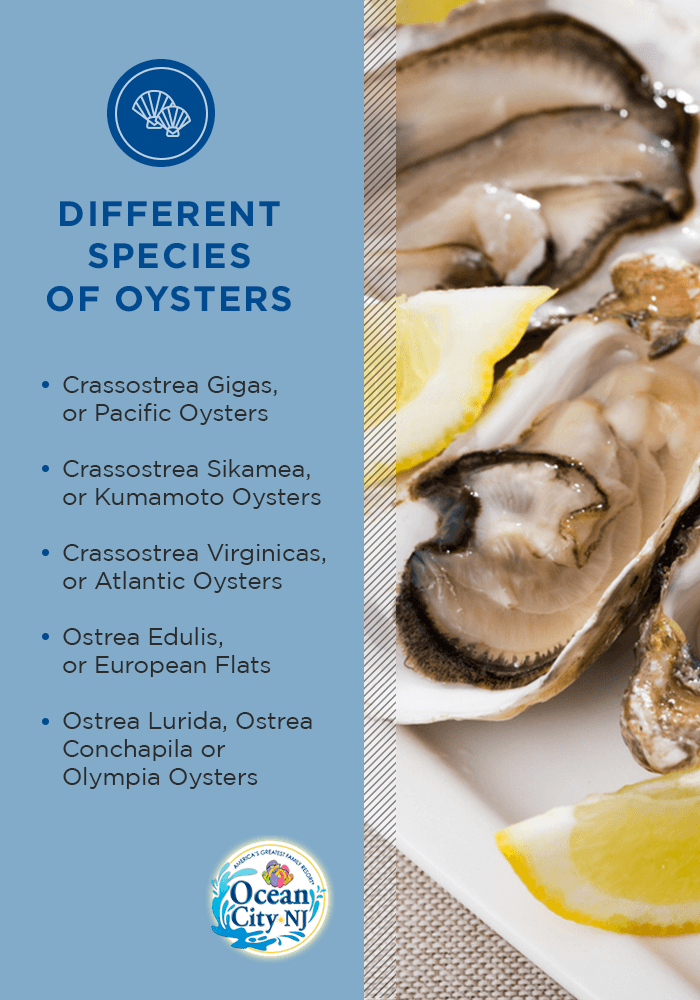 Different Species of Oysters